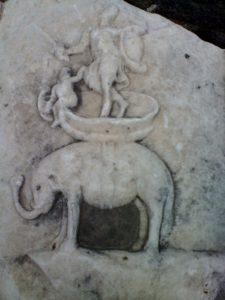"""Donna su Elefante, """" forse damaroto"""""""